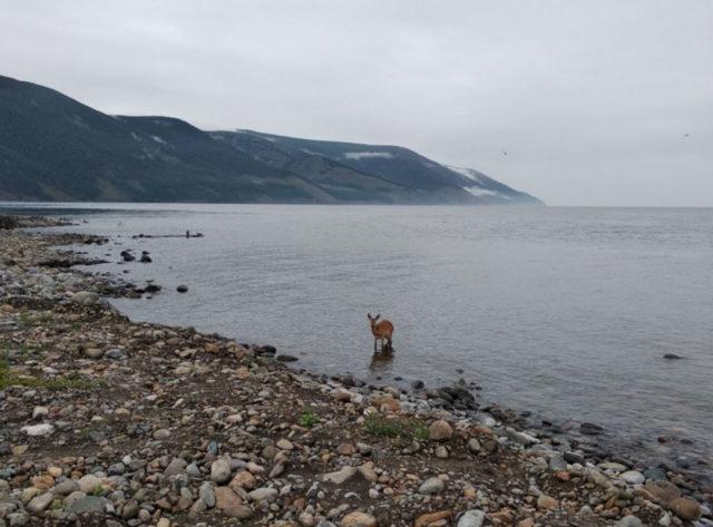 Котельниковский источник на Байкале